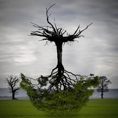 Image of upside down tree with roots in air